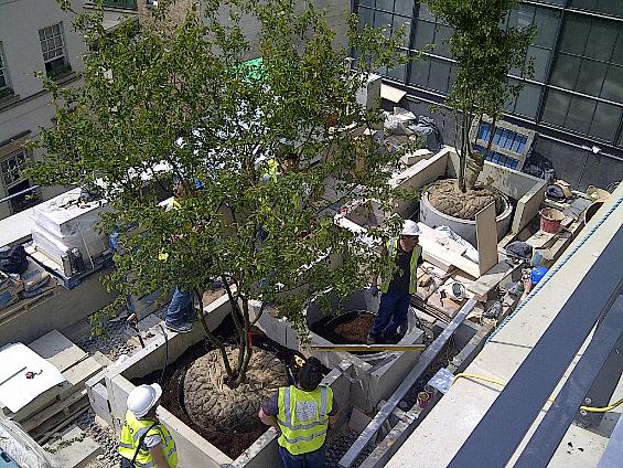 building terraces London